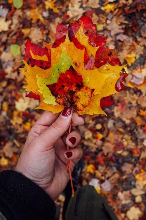 via Bostonian Resolution #autumn #fall #leaves