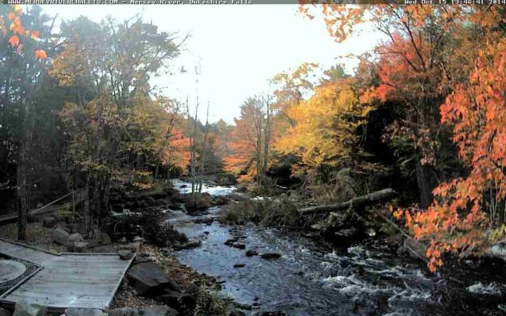 """Even if something is left undone, everyone must take time to sit still and watch the leaves turn."" - Elizabeth Lawrence #LeafWatch  http://www.novascotiawebcams.com/en/webcams/mersey-river-chalets-and-nature-retreat/"
