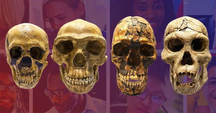 Though the exact number is disputed, it is believed that there have been as many as six human species. Before the Homo sapiens, there were Homo habilis, Homo rudolfensis, Homo erectus, and Homo heidelbergensis. Homo sapiens were contemporaries with Homo neanderthalensis and Homo floresiensis.