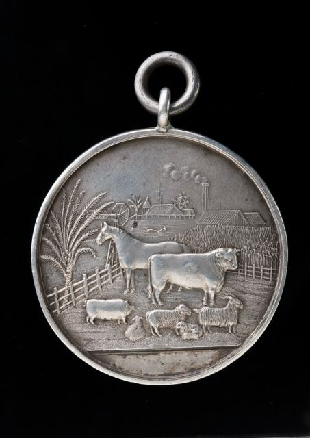 Hawkesbury District Agricultural Society 1883 'Best Coaching Stallion'