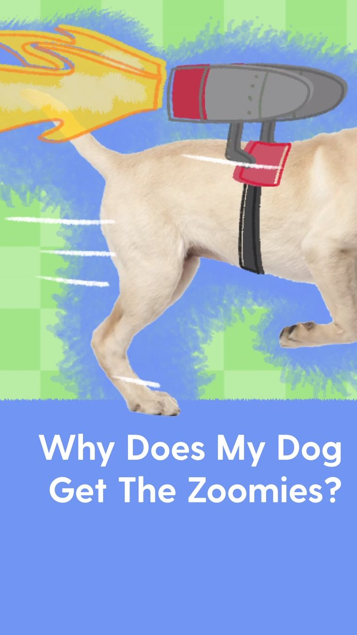 Funny Animal Jokes, Funny Animals, Cute Animals, Puppy Care, Dog Care, Happy Animals, Animals And Pets, Dog Washing Station, Puppy Training Tips