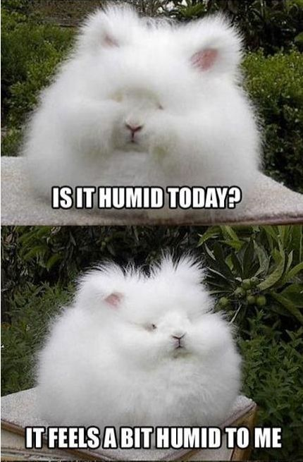my hair has much in common with this bunny