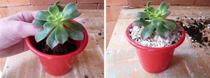 Como trocar plantas de vaso - Faça Você mesmo - Homens da Casa