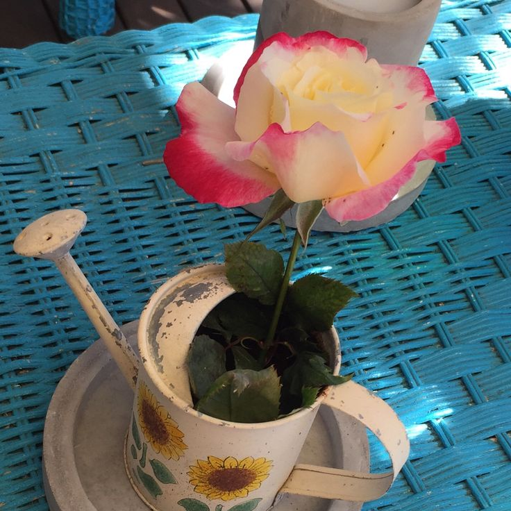 When your nephew leaves a rose on your deck. So nice.