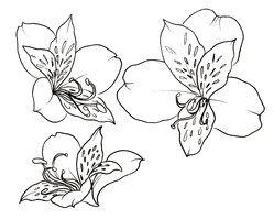 Peruvian Lily Flowers Tattoo by ~Metacharis on deviantART
