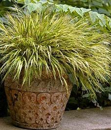 351 best ornamental grasses in the garden images on pinterest ornamental grasses garden ideas and gardens