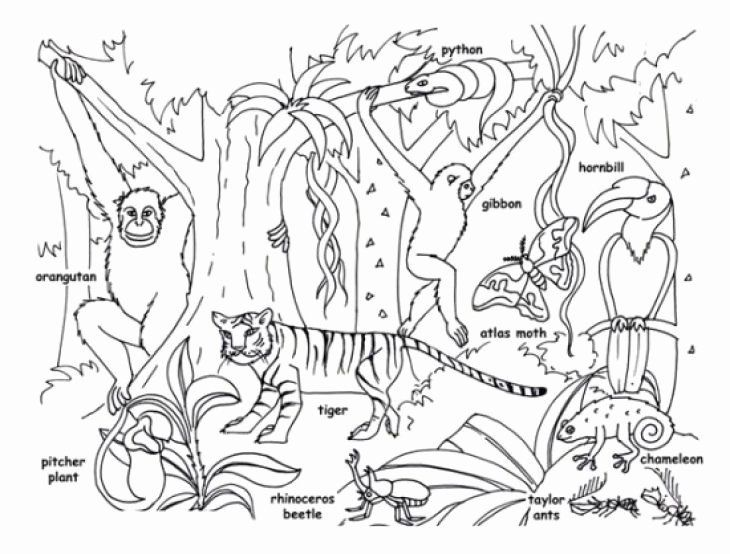 Printable Rainforest Coloring Pages New Tropical Jungle And Rainforest Animals Coloring Page Kids In 2020 Rainforest Animals Animal Coloring Pages Coloring Pages
