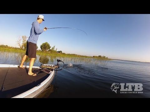 Wacky rig senko hooks bass fishing youtube bass for Youtube bass fishing
