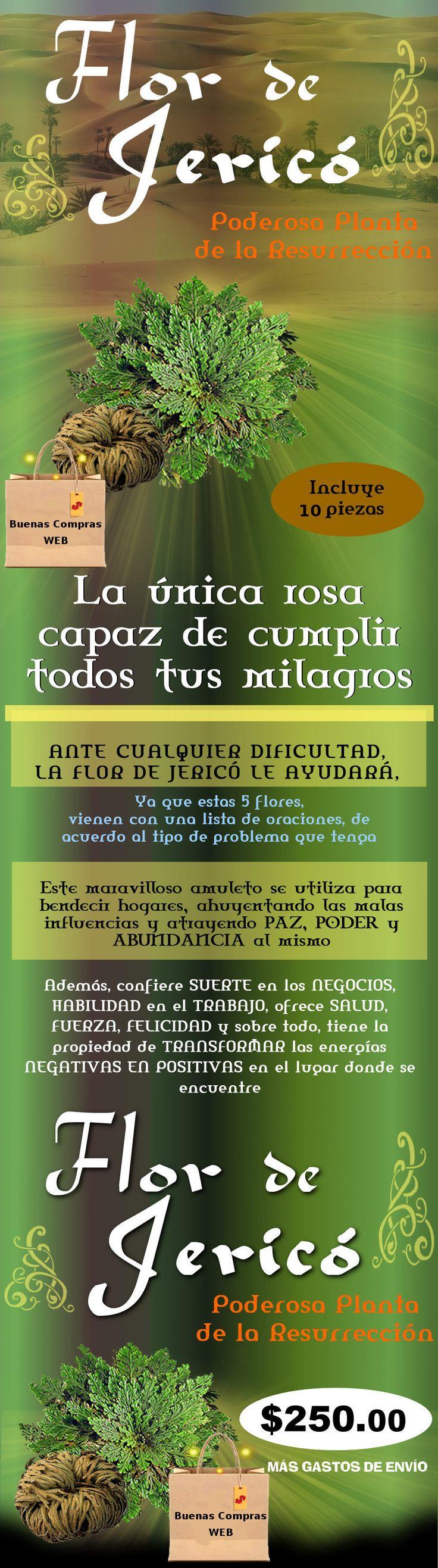 Autentica Rosa de Jerico - 12 piezas 250.00 en mercado libre