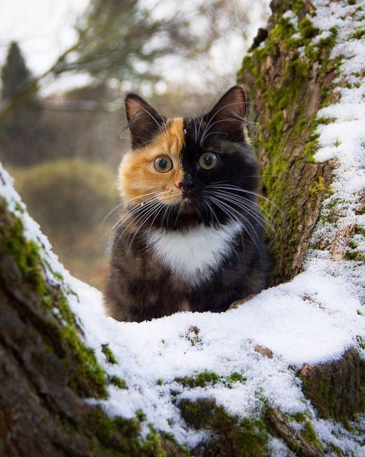 """Looks like Venus the """"Two-faced cat"""""""