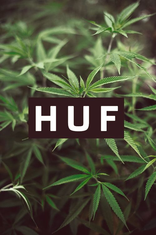 HUF Worldwide.  How to grow Marijuana - Visit our Weed Seed Shop Here: http://www.weedseedshop.com/refer.asp?refid={28DF3583-3A1A-4991-93C0-FB5E09CF94DB}&link=cannabis-seeds/outdoor