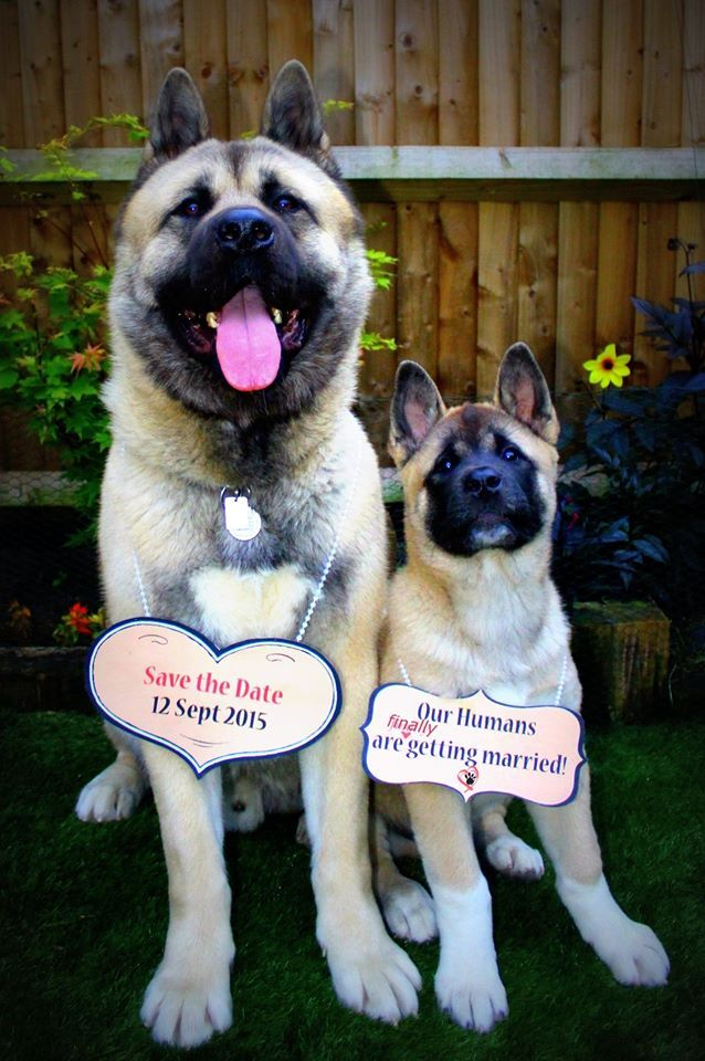 DIY fun wedding planning save the date card with dogs #savethedate #savethedatesmith