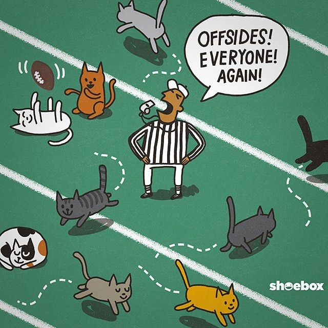 Literally Like Herding Cats Kittenbowl Hallmarkchannel With