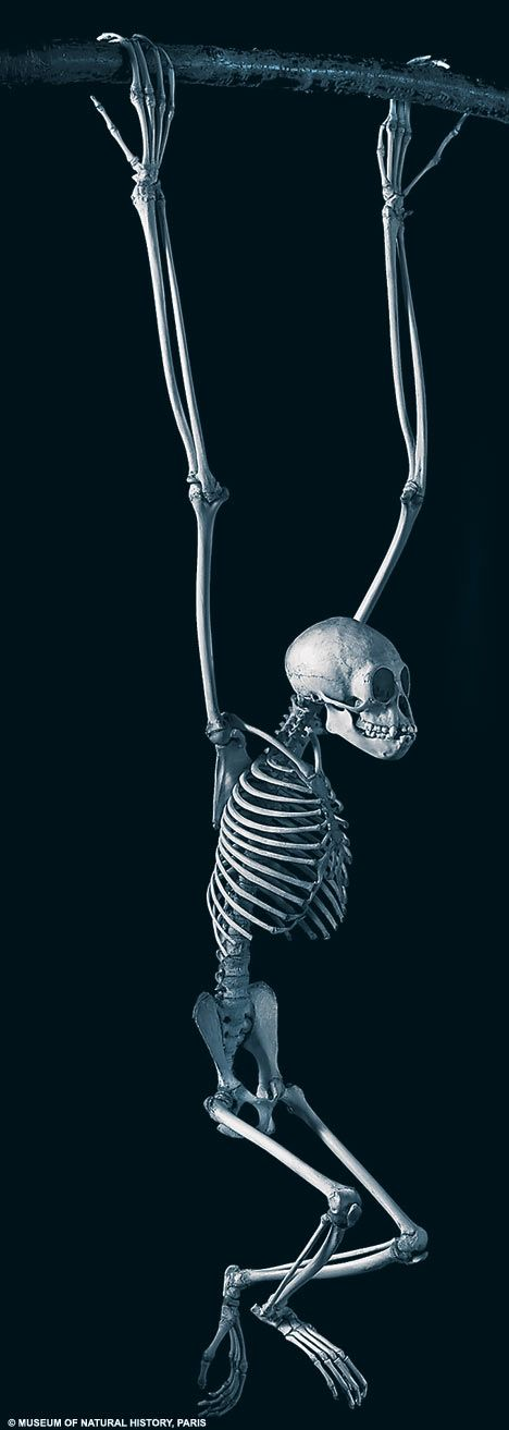 Close to the bone: The amazing pictures which reveal how evolution has shaped animal skeletons | Daily Mail Online