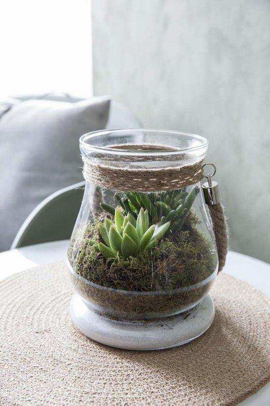 Det er trendy med sukkulenter og kaktuser både ute og inne. De er både stilige og lettstelte og gir inspirasjon til det glade 70-tallet.