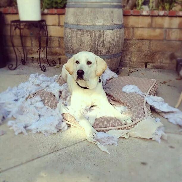 Dog Tears Up Rug: I Don't Care What They Say...there Is Not A Dogbed Made