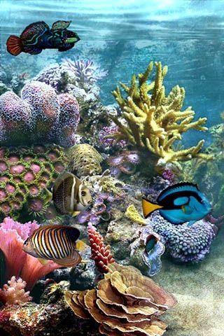 Underwater fantasy.  Gorgeous coral reef.                                                                                                                                                     More