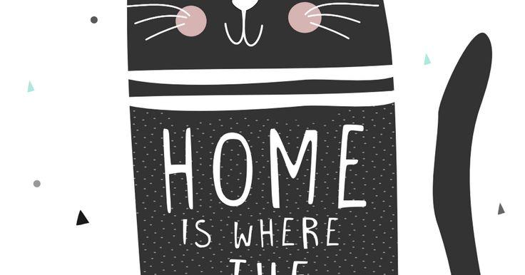 home cat.pdf