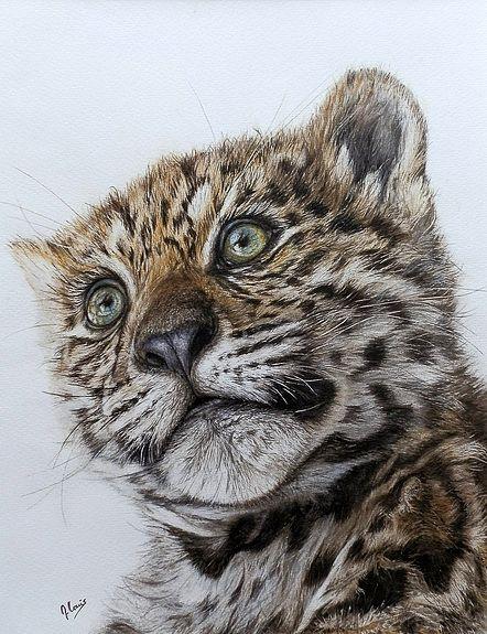 17 best images about animal art on pinterest artworks portrait and jaguar - Bebe du jaguar ...