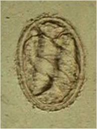 Metastrongylus spp. Nematode | Parasites | Pinterest