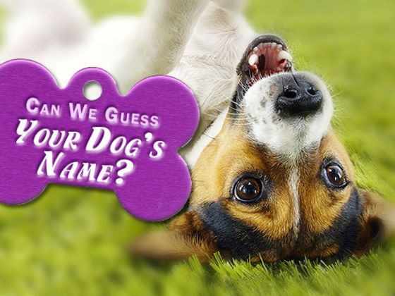Find The Perfect Dog Name Quiz