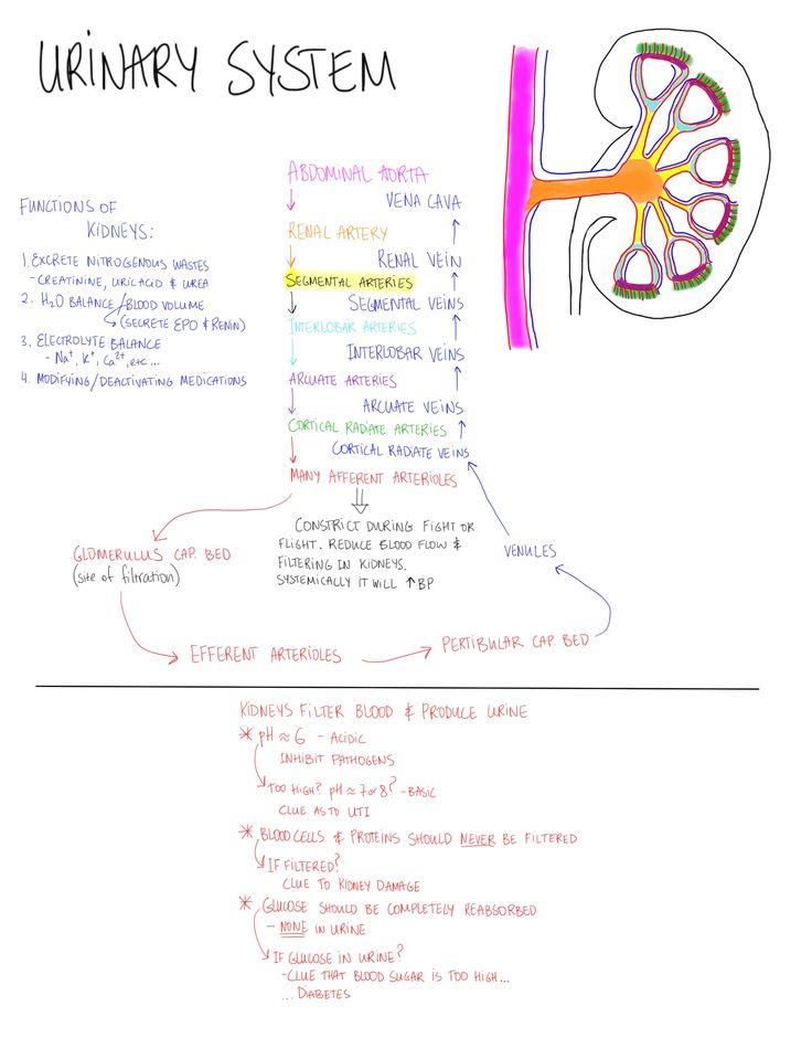 nursing articles on kidney stones