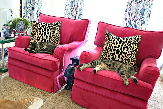 Hot Pink Velvet Club Chairs A New Look In The Living Room Club Chairs Living Room Home Decor Living Room Decor