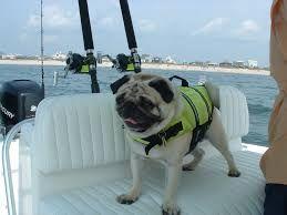 Resultado de imagen de boating with animals