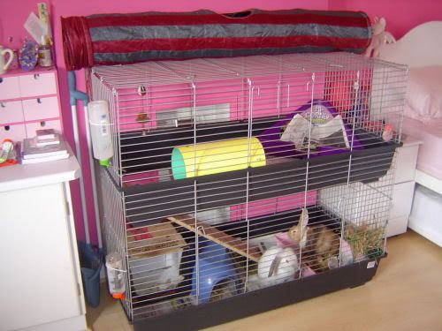 Rabbit cage sale woodworking projects plans for Design indoor rabbit cages