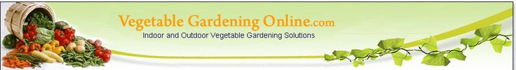 This site provides the info about the likes and dislikes of the plant you are growing. Growing kale? They like lots of nitrogen so maybe put them next to beans.