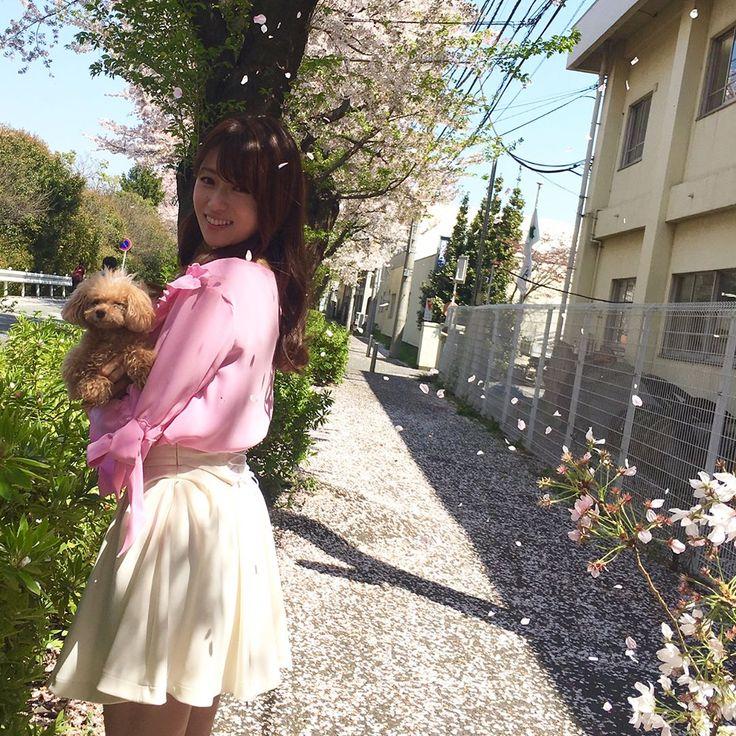 撮影の合間に桜の花道をお散歩しました🌸天気が良い日は更に綺麗ですねぇ🍡桜の時期は無意識に気がついたら上を向いて歩いてる....🎀 #桜の絨毯 #メロン眠いのかな...? #kyokofukada