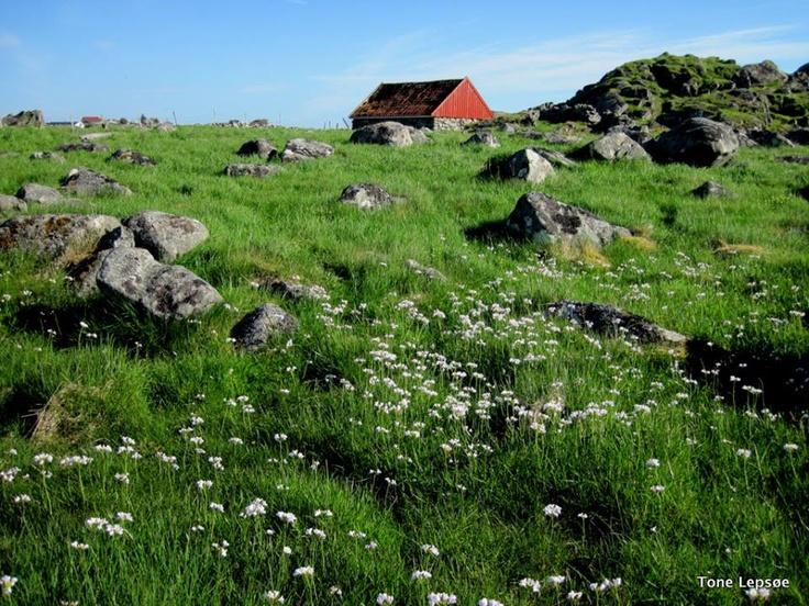 Phototrip to Liknes south 05.06.06. Karmøy, Rogaland, Norway. http://tonelepsoe.smugmug.com/