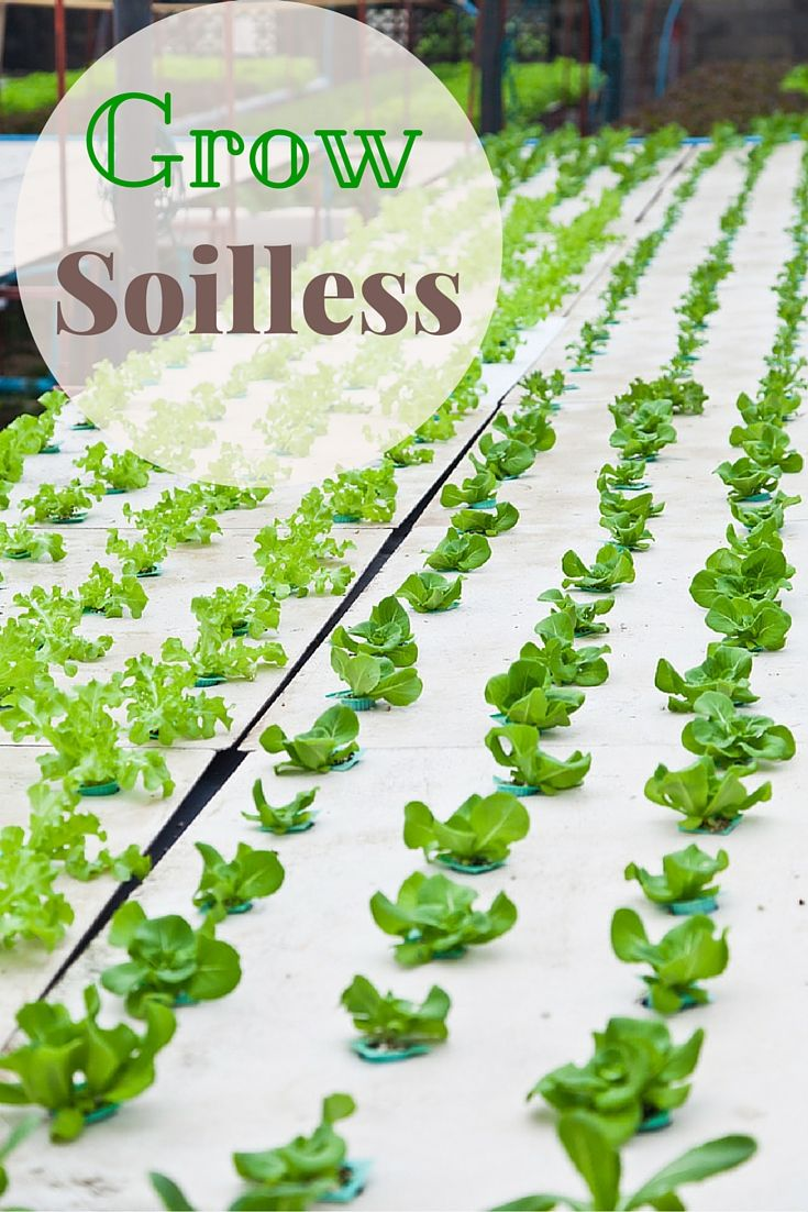 Hydrophonics is the new way of gardening. Adopt the science of soilless gardening for growing crops which was used by many early civilizations.