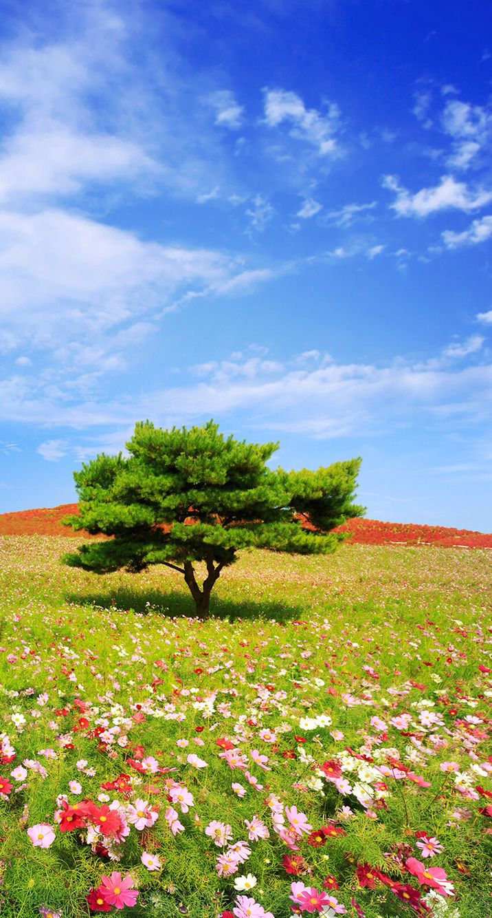 Tree on a sunny, grassy hill with flowers.