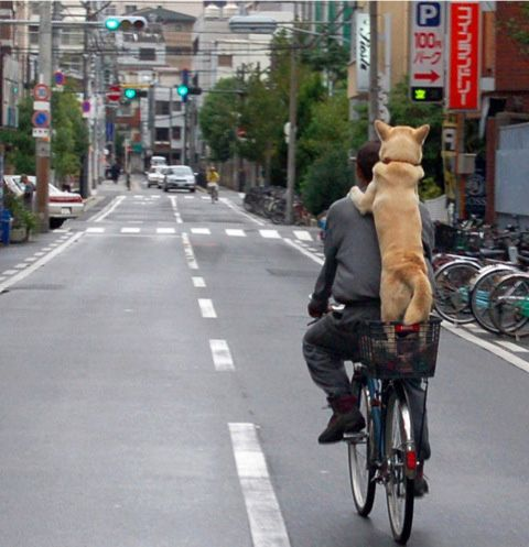 {piggy back?} this is entirely too cute! I wish I could train my dog to do this.
