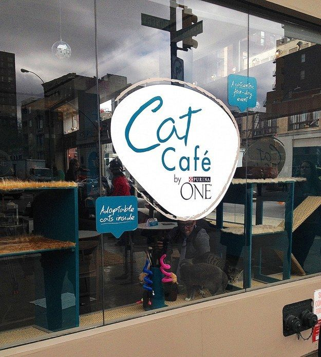 The outside of the café lets you know EXACTLY what you're getting into...