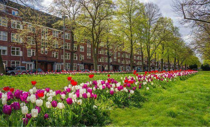Фестиваль тюльпанов. Амстердам / Новости / Джой Тревел Групп