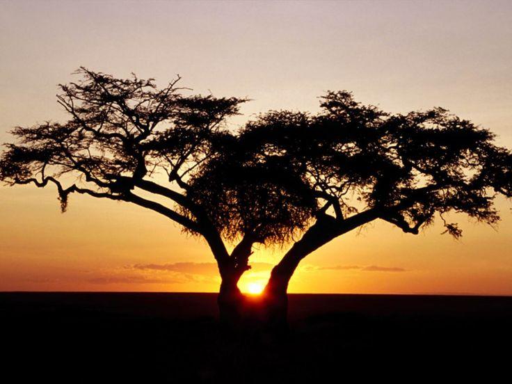 safari in Africa!   2008