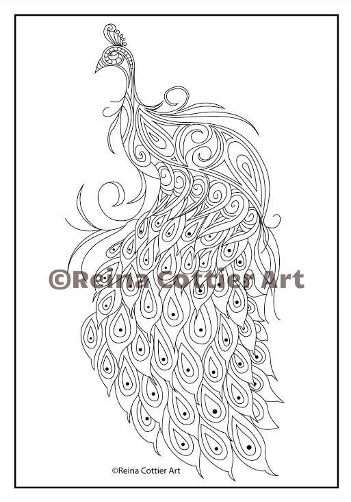 Peacock. Colouring Book by Reina Cottier.  View or Buy here: https://www.etsy.com/listing/240707291/reina-cottier-art-colouring-book-for?ref=shop_home_feat_1