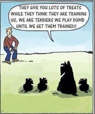 what they must think � scotties are heaven scott�