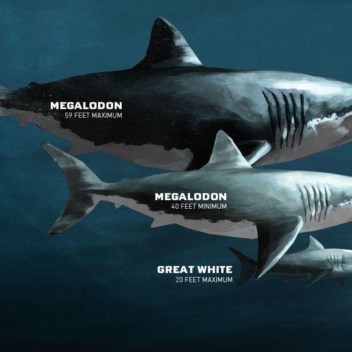megalodon - Google Search