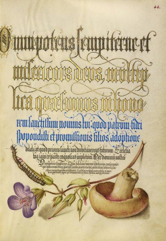 Joris Hoefnagel, illuminator [Flemish / Hungarian, 1542 - 1600] and Georg Bocskay, scribe [Hungarian, died 1575] 1561 - 1562; illumination added 1591 - 1596