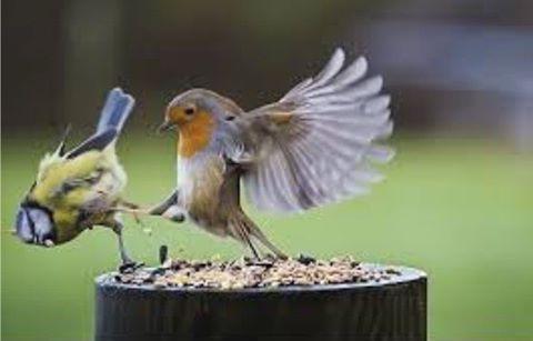 Buzz off! It's my dinner!