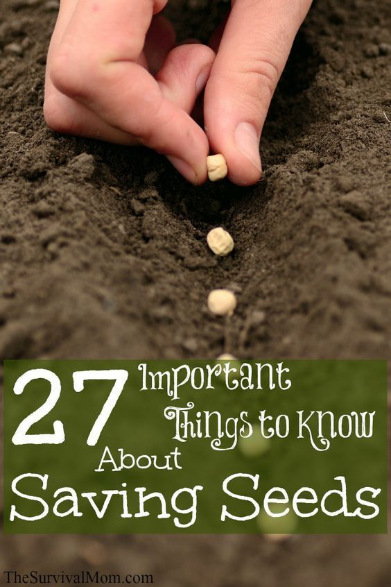 27 Important Things You Should Know About Saving Seeds – Survival Mom