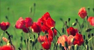 Berita Terkini : Ribuan Orang Matanya Silau Setelah Melihat Bunga Mekar