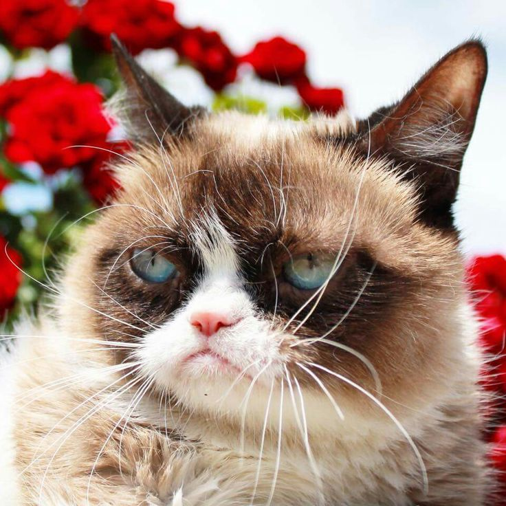 17 Best Images About Grumpy Cat And Pokey Cat On Pinterest