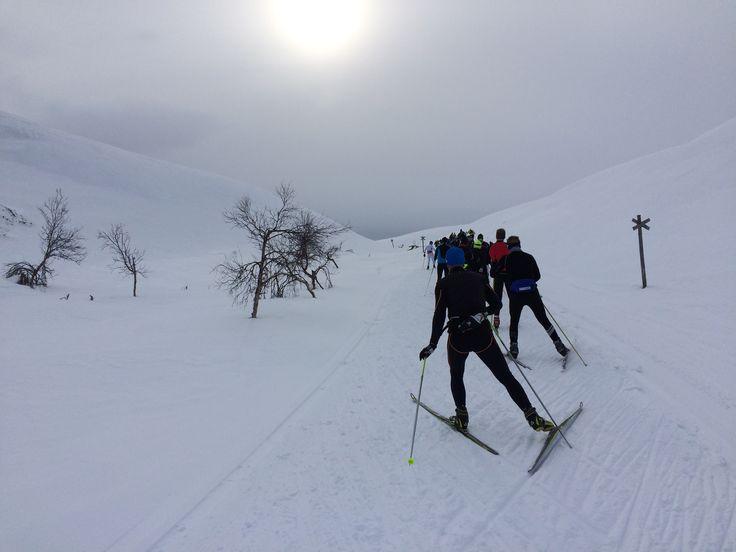 Lapponia ski event, Finland   Hetta-Pallas-Olos 80 km