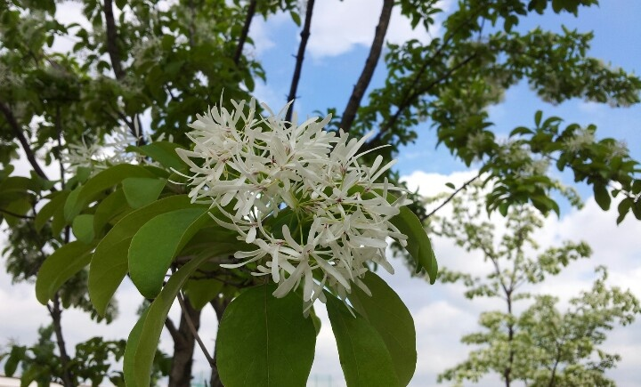 Tree & flower