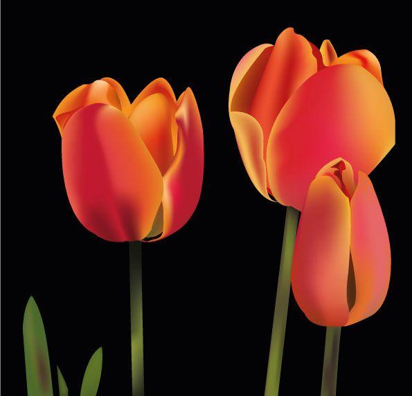 Tulipanes. Ilustración vectorial realizada en illustrator