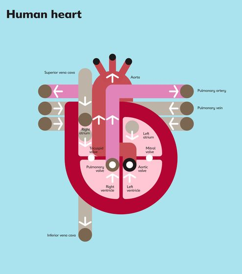 The Human Heart – Peter Grundy – Illustrators & Artists Agents – Début Art